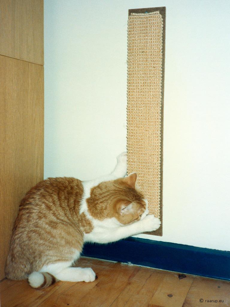 Alice Cat Breed